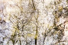 Tenth Disintegration (pni) Tags: sky tree suomi finland helsinki branch centralpark multipleexposure helsingfors tripleexposure multiexposure keskuspuisto skrubu pni centralparken pekkanikrus