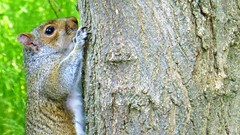 You can't hide from this 20X telephoto! - Cach sur l'arbre (eileansiar) Tags: tree home animal arbol mammal backyard squirrel arbre baum ardilla eichhrnchen cureuil eileansiar