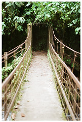 Puente (Patrick J. Negwer) Tags: dog naturaleza verde green dogs nature water rio river waterfall ecuador agua perro perros cascadas mindo nambillo