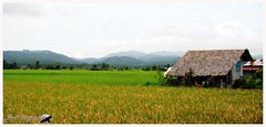 Pola Rice field - Oriental Mindoro, Philippines (Joost Crispyn) Tags: travel reisen philippines canvas ricefield pola reisfeld philippinen pmc reizen leinwand doek filipijnen canvas rijstveld photography oriental sonydsch9 crispyn joost crispyn pmc mindoro reisacker