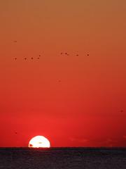 / Kawajirifishing port (arixxx+++) Tags: morning sea sky japan sunrise fly seagull