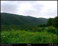 Nashib, Salalah, Dhofar (Shanfari.net) Tags: green nature season lumix raw natural panasonic vegetation greenery lush oman fz zufar rw2 salalah sultanate sarb dhofar عمان khareef سلطنة خريف صلالة dufar صلاله ظفار الخريف محافظة موسم dhufar governorate dofar fz38 fz35 dmcfz35 الصرب صرب