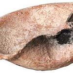 "<b>Oil Lamp</b><br/> Oil Lamp Ceramic, 1500-1250 BCE Origin: Beit Ula LFAC# 618<a href=""http://farm8.static.flickr.com/7153/6419588491_034edd1e02_o.jpg"" title=""High res"">∝</a>"