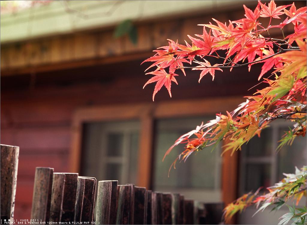 2011,福壽山。