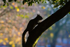 A squirrel in front of your house may be more relevant to your interests right now than people dying in Africa. (explore 2011_12_04) (AlexTurton) Tags: park tree 120 silhouette canon birmingham squirrel grove bokeh sigma 400 7d sigma120400