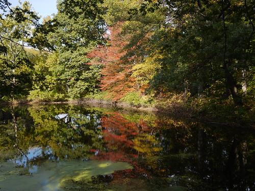 Twin Lakes, NY Botanical Garden
