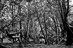 local jungle (Es.mond) Tags: trees bw monochrome forest weird woods shapes odd jungle local bent durhamregion ajaxontario nikond90 afs35mm18nikkor greenwoodconservationpark
