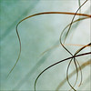 intersect (1crzqbn) Tags: sunlight abstract color macro texture nature grass square shadows bokeh 7d ie legacy shining breastcancer minimalist hypothetical tistheseason intersect prairiefire thankyouall artdigital idream focus52 52weeksproject carextestacea awardtree magicunicornverybest trolledproud exoticimage 1crzqbn thebigfivetwo theateamrallyingforaurelia 49522011