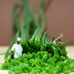 chopping herbs (simon zalto) Tags: food salzburg green cooking miniature herbs explore chef chop ho kche chives modell figuren kruter koch kochen schnittlauch preiser stadtcafe holzfller