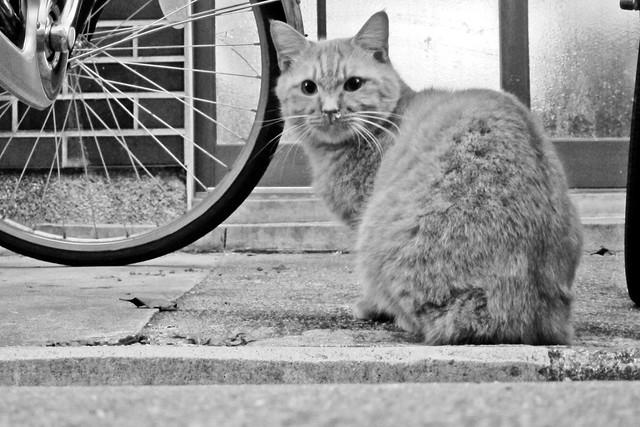 Today's Cat@2011-12-12