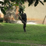 "Chimp Climbing <a style=""margin-left:10px; font-size:0.8em;"" href=""http://www.flickr.com/photos/14315427@N00/6505507419/"" target=""_blank"">@flickr</a>"