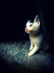 coming out of the dark (life begins with 4t) Tags: travel light pet art nature animal cat fur lumix photography kitten feline philippines tire panasonic marikina 4t kittenmagazine kittyschoice 4tsuarez fortunatocsuarezjr