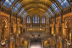 Natural History Museum (Jonathan.Russell) Tags: uk england people 3 detail london history animals museum canon bench chalk long exposure dinosaur natural steps culture walls hdr fascinating 40d
