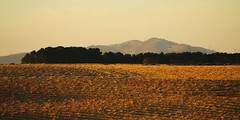 Mt Misery (blachswan) Tags: sunset australia victoria windrows mtmisery waubrawindfarm mtercildoune