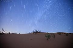 Startrails (TARIQ-M) Tags: canoneos5dmarkiifullfram canonef1635mmf28liiusm riyadh saudiarabia desert sand texture waves dunes landscape startrails tree star stars                      longexposure