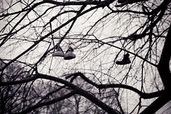 An unexpected finding (xibalbax) Tags: tree canon shoe shoes branch branches 7d 1755mm canoneos7d