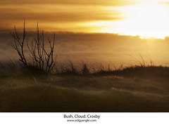 Bush, Cloud, Crosby. (Ianmoran1970) Tags: light sunset sky orange cloud beach grass yellow bush sanddune crosby ianmoran ianmoran1970