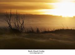 Bush, Cloud, Crosby. (Ianmoran1970) Tags: light sunset sky orange cloud beach grass yellow bush sanddune crosby ianmoran ianmoran1970