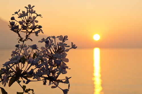 A Japanese-style sunset over lake Geneva