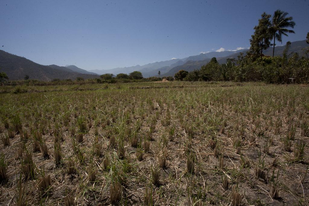 Plantation de Nexar et Fils, Environnement