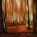 Autumnal Vision