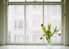 some color (*Cinnamon) Tags: home tulips kodak nikonf100 400 portra thewindow sigma50mmf14