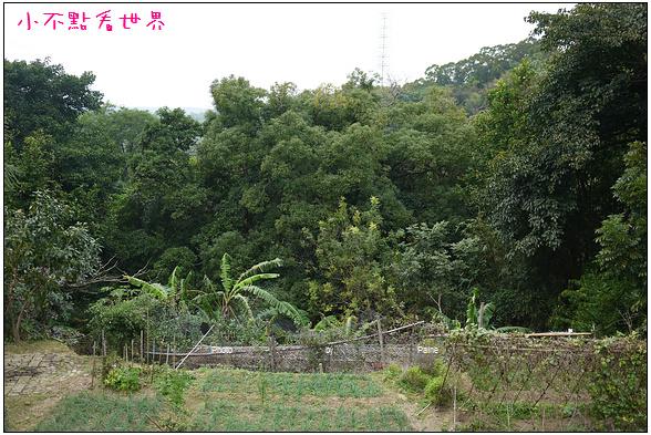寶山大樹茶屋 (4).JPG