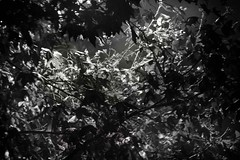 ... impregnato di cielo ... (UBU ♛) Tags: blancoynegro blackwhite noiretblanc blues dreams blunotte blureale blupolvere ©ubu blutristezza unamusicaintesta landscapeinblues bluubu luciombreepiccolicristalli