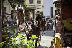 DSC_0148 (Kohji Iida) Tags: horse photography photo nikon asia metro south philippines picture east cruz manila filipino local folks pinoy sta kalesa kohji iida d90 carriedo