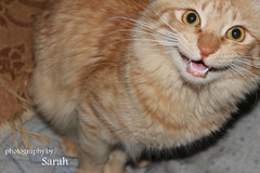 when cats say : MEOW ! (Sarah Altamimi) Tags: sarah cat meow