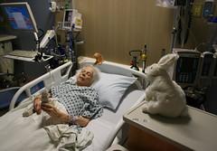 Hopper assures mom at nap (shiroibasketshoes hopper) Tags: cute rabbit bunny bunnies hospital nice heart mother camel rabbits caring care sick illness highbloodpressure irregular heartbeat fibrillation medial atrail