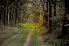 Paths Of Darkness* (heinvanwersch) Tags: tree nature woods path fantasy hein woodscape heinvanwersch mygearandme mygearandmepremium mygearandmebronze mygearandmesilver mygearandmegold mygearandmeplatinum