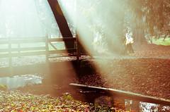 The light (Riccardo Brig Casarico) Tags: morning light italy sun water colors alberi wow photography photo nikon italia colours foto fiume fotografia nikkor sole colori atmosfera luce paesaggio brig 18105 giorno riki camminare fiumi boschi atmosphre d5100 brigrc