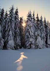 erdei angyal / forest angel (debreczeniemoke) Tags: winter snow forest landscape hiking pinewood tájkép hó tél erdő túra fenyves forestangel canonpowershotsx20is outstandingromanianphotographers erdeiangyal