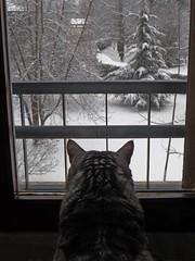 Il fuori da dentro (car.lo's) Tags: finestra neve gatto