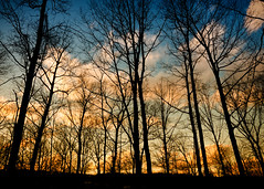 Winter Trees Sunset (Sky Noir) Tags: blue trees winter sunset orange usa yellow clouds forest photography evening us twilight woods sundown dusk unitedstatesofamerica silhouettes wispy nightfall skynoir bybilldickinsonskynoircom