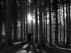 TREEHUGGING (kenny barker) Tags: trees winter sunset monochrome forest dark landscape lumix scotland daarklands panasonicgf1 kennybarker