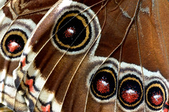 Schmetterlingsflgel (Fotostube.de) Tags: macro butterfly artwork shiny colorful bestof bright abstractart caterpillar excellent glowing falter lucid makro photoart brilliant farben schmetterling papilio raupe crawler photodesign mulitcolored graphiumagamemnon fotoart idealeuconae fotokunst gretaoto limenitiscamilla geschweiftereichelhher wandkunst papiliodemodocus kleinereisvogel makrofotos weisebaumnymphe glaswing buypictures fotoknstler knstlerbilder modernefotokunst fotostube fotoblumen fotokunstkaufen exclusivebilder kunstbilderkaufen kunstzumkaufen modernekunstkaufen kunstdruckekaufen leinwandfotos nymphenfalter