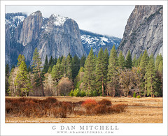 Winter Meadow, Forest (G Dan Mitchell) Tags: california park travel trees winter red cliff usa mountain snow nature america forest print landscape nevada north stock scenic meadow brush sierra national valley yosemite license range cooks rugged dormant greass