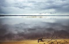 Before the rain ((Virginie Le Carr)) Tags: cloud lake france reflection reed nature landscape outside grey gris branch cloudy horizon sable lac naturallight nuage paysage extrieur reflets branche roseau sanguinet blackcloud nuageux