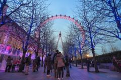 (Monkey.d.tony) Tags: uk travel england london nikon europe londoneye tokina british westminister londonaquarium イギリス d7200 thecocacolalondoneye