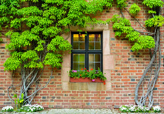 Window surrounded with fresh green (Kat-i) Tags: trees green window wall germany bayern deutschland bavaria bricks nuremberg grn kati bume nrnberg mauer katharina 2016 ziegelsteine nikon1v1 febnster