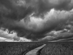 stormy boardwalk (marianna armata) Tags: canada nature monochrome lines clouds point landscape curves perspective stormy boardwalk pele p2320544