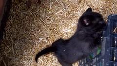 Kittens (wrangling dragons studios) Tags: cats animals kittens