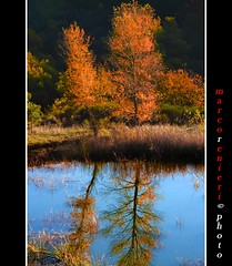 Narciso................... (marcorenieri) Tags: italy panorama foglie lago italia campagna tuscany toscana albero acqua autunno azzurro colori controluce specchio bosco gambassiterme marcorenieri
