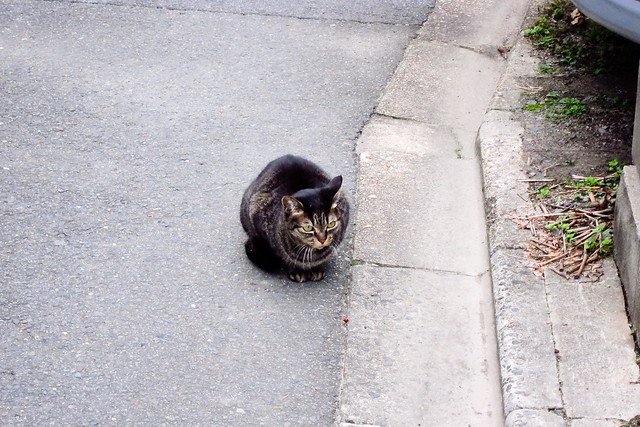 Today's Cat@2011-11-26