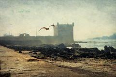 Mogador (osolev) Tags: ocean africa seascape marina seagull paisaje atlantic morocco maroc marruecos gaviota essaouira lanscape textured oceano afrique atlantico mogador atlantique ltytrx5 ltytr1 esauira osolev