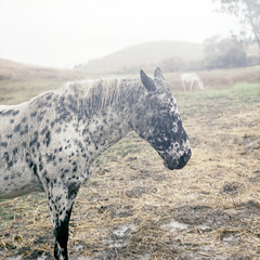 the sad horse (Terry Barentsen) Tags: california horse film fog kodak tl pentacon six fairfield 160 2011 vps