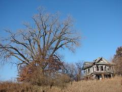 Double abandonment (David Sebben) Tags: county winter tree leaves farmhouse rural oak alone iowa jackson vacant lonely abandonment decrepate