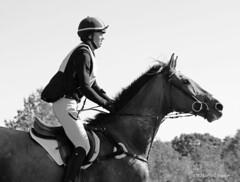 intensity (Jen MacNeill) Tags: horses horse jumping maryland crosscountry horseshow equestrian thoroughbred macneill fairhill eventing threeday eventers gypsymarestudios jennifermacneilltraylor